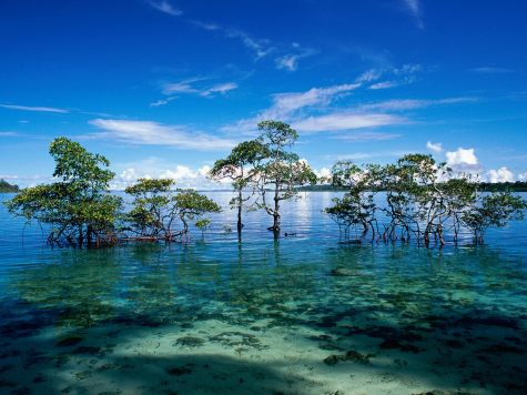 Havelock_Island__Andaman_and_Nicobar_Islands__India